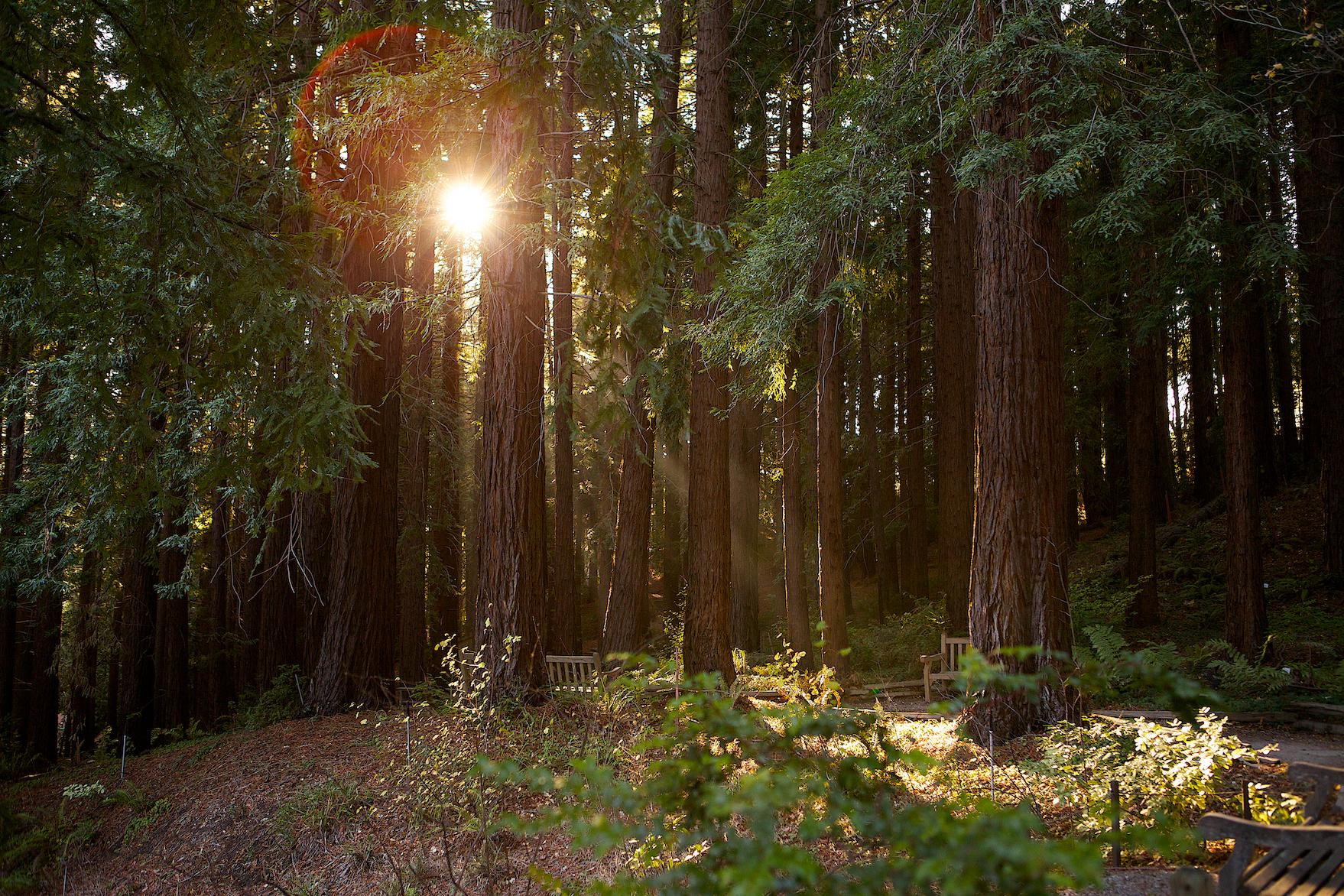 UC Berkeley Botanical Gardens 119 | San Francisco Bay Area Wedding ...